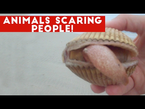 Funniest Animals Scaring People Reactions of 2017 Compilation Funny Pet Videos