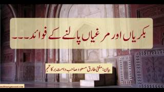 Mufti Tariq Masood :  Bakriaan aor murghiaan palny k fawaid