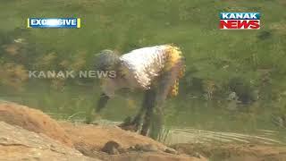 Kanak News Exclusive: Gemstone Deposits Found In Mahanadi Bank In Boudh