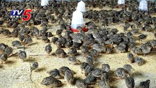 Quail Farming | Experts Suggestions For Farming Methods | Telugu News | TV5 News