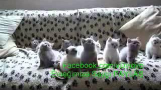 Tenis Maçı izleyen Kediler kop kop