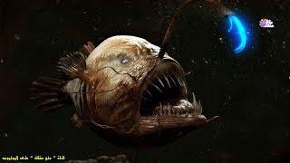أغرب 8 مخلوقات بحرية عرفها العالم - لن تصدق أنها موجودة بالفعل !