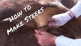 Making STEERS out of BULLS