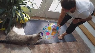 Angelo's Mom Loves Her Son's Cat Roommate