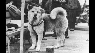 اوفا كلب فى التاريخ انتظر صاحبة 10 اعوام كامله