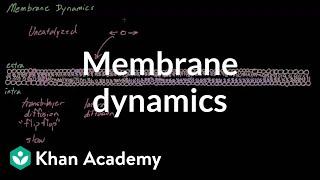 Membrane dynamics | Cells | MCAT | Khan Academy