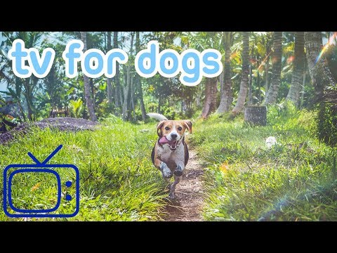 Xxx Mp4 NEW And IMPROVED Entertaining TV For Dogs Chill Your Dog 3gp Sex