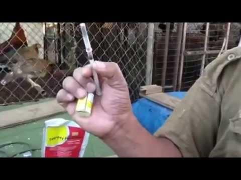 postura de gallos Cuida de carlos Haro 1