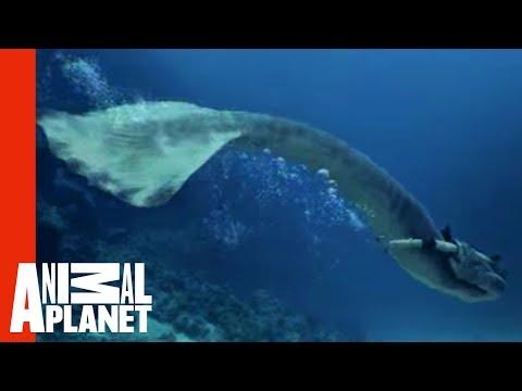 Xxx Mp4 Mermaids Attacked By Giant Shark Mermaids 3gp Sex
