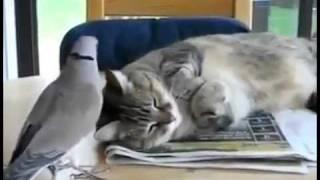 dont distab cat.mp4