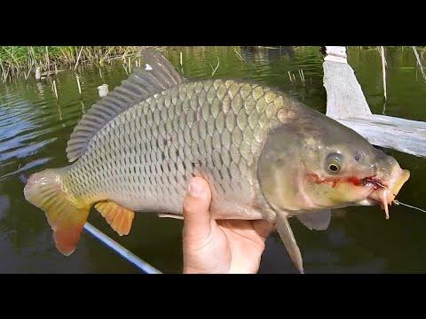 рыбалка на карпа с боковым кивком