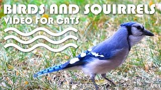 ENTERTAINMENT VIDEO FOR CATS. Birds and Squirrels for Cats to Watch.