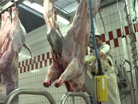 Abate bovinos SAPUVET parte 01