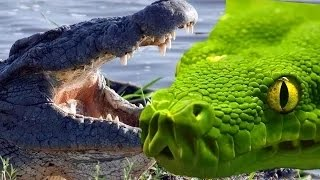 crocodile vs anaconda full movie_(240p)