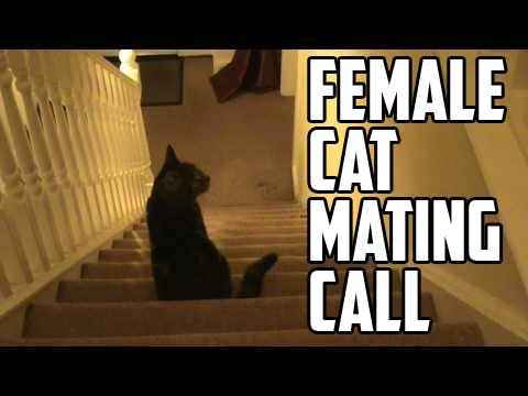 Trubble - Female Cat Mating Call