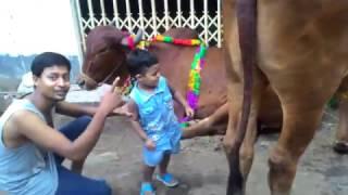 baby VS Cow fun video  Bd   YouTube Full HD,1920x1080p