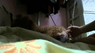 강아지출산동영상