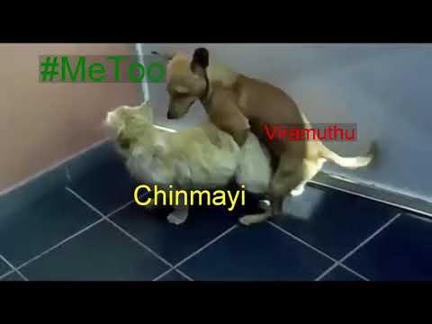 Xxx Mp4 Chinmayi Amp Viramuthu Sex Video 3gp Sex