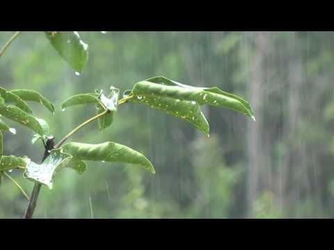 Xxx Mp4 Yağmur Sesi Thunder Ve Biraz Yoğun İdeal Sleeping Olmadan Rahatlatıcı 8 Saat 3gp Sex