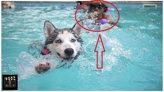 সুইমিং পুলে নেমে কুকুরের কান্ড ।The dog's stomach dropped to the swimming pool  BD Live 24