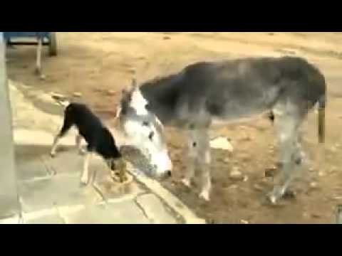 funny dog and donky fight