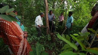 The Vanguards of Angul: People and forests