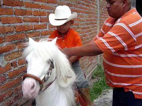 el junior en su pony de cuahutemoc colima