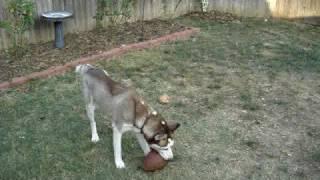 Jackson playing football