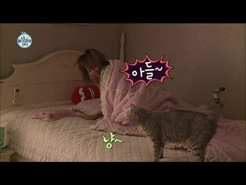 Xxx Mp4 【TVPP】Hyorin SISTAR Aegyo For Cats 효린 씨스타 아들 잘 잤쪄 어디에서도 볼 수 없었던 효린의 폭풍 애교 I Live Alone 3gp Sex