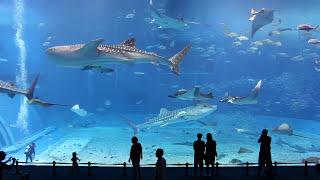 Kuroshio Sea - 2nd largest aquarium tank in the world - (Please Don't Go by Barcelona)