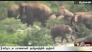 30 elephants from Karnataka seek shelter in Tamil Nadu forest area