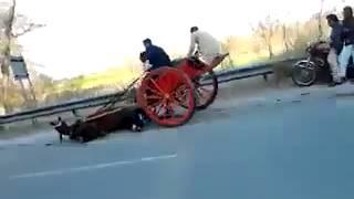 Horse Race Accident Pakistan