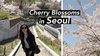 Cherry Blossoms in Seoul + Shopping in Myeongdong (yup)
