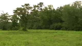 Oneonta, Alabama - 27.98 Acres - Reneau Road