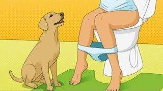 Das ist der Grund, wieso Hunde dir ins Badezimmer folgen!
