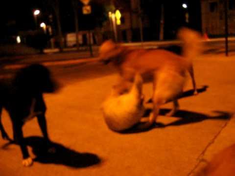 Perros de la calle Reservoir dogs