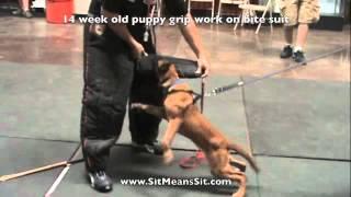 Puppy Bite Work Sit Means Sit Dog Training