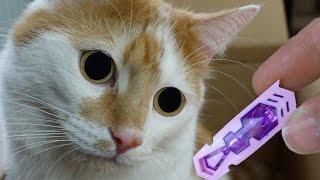 3 coole Katzen Spielzeuge für Johnny und Bella