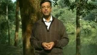 Rare Indian wood smuggled into China
