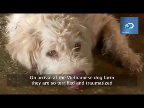 Dogs were injected water before being killed