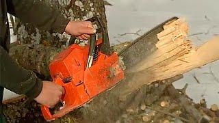 Labores de poda y tala en el invierno de Villavieja del Lozoya