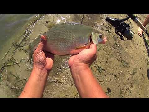 рыбалка на карася крупного на реке