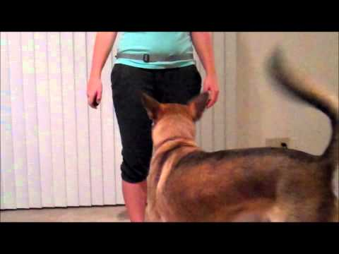 Teach Your Dog To Heel In 5 Days - Day 1