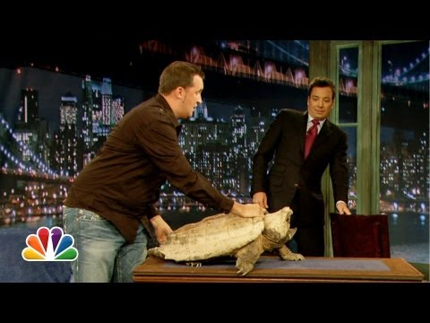Jeff Musial Green Iguana Fennec Fox Late Night with Jimmy Fallon