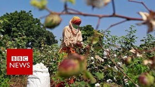 The poison killing farmers in India - BBC News
