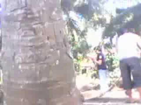 Ngintip anak abg ML di kebun kelapa