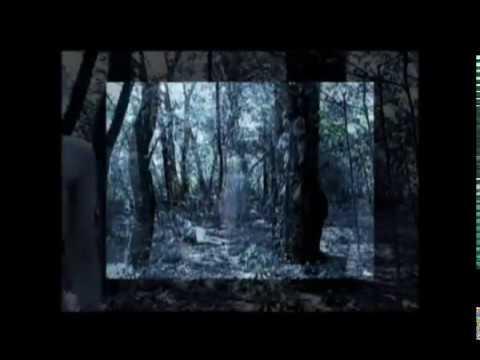 Kiddycar Shadow butterfly sunlit silence OFFICIAL VIDEO