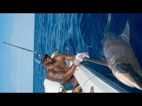 Xxx Mp4 Shark Fishing With NFL Linebacker Sam Barrington 4K 3gp Sex