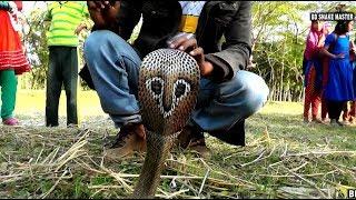 পটুয়াখালী রাজ্জাক বিশ্বাস সাপ ধরার এক্সক্লুসিভ লাইভ ভিডিও নতুন পর্ব - ৩৭ | BD Snake Master | HD