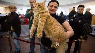 [NTU] Донецкие киски.  В ДНР прошла выставка котов. украина новости сегодня